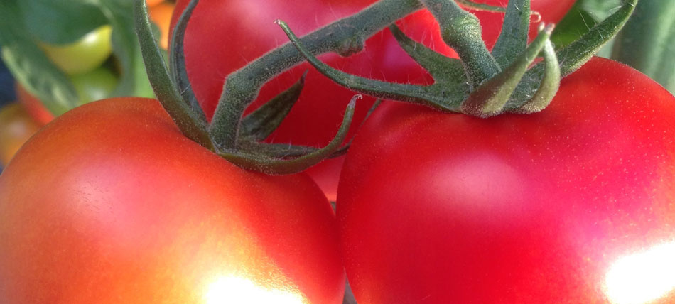 Wexford Tomatoes Profile